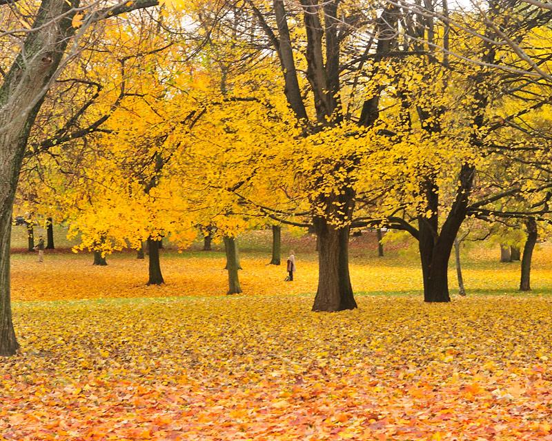 Chorley-Park