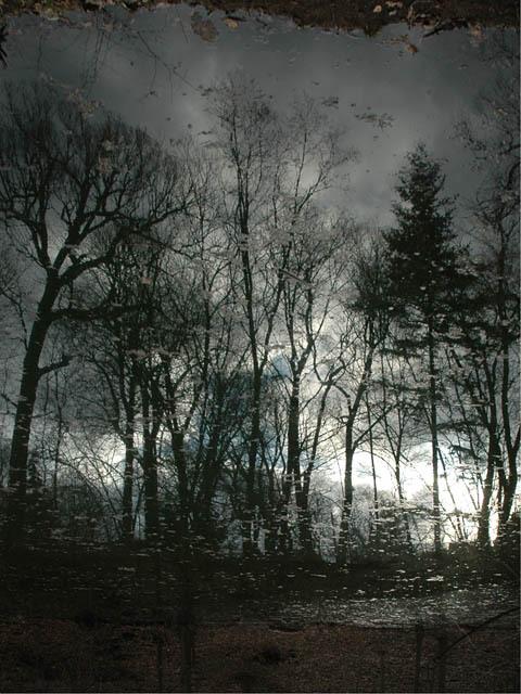 Wychwood_park