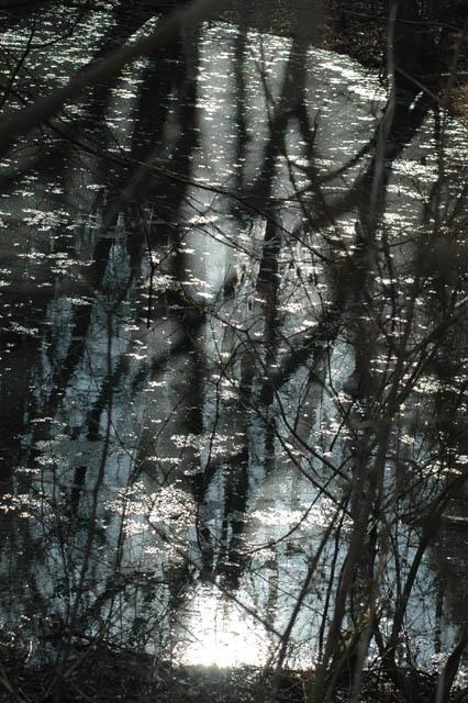Wychwood_pond