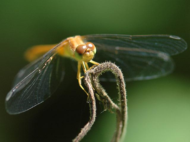Pretty_fly_2
