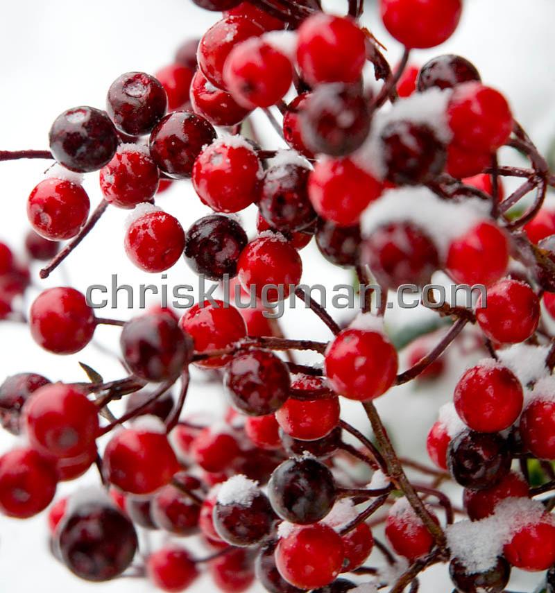 Cool_berries