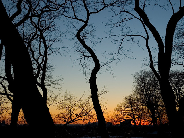 Arboreal_sunset_1