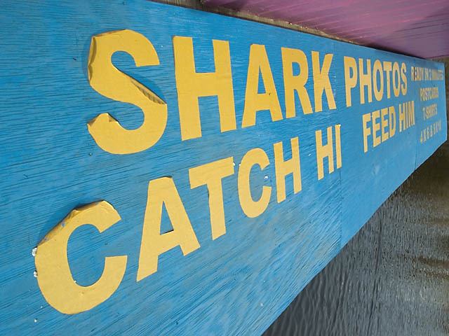 Shark_photos